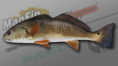 Red Drum Fish | Red Drum Fish Fishing Planet Forum