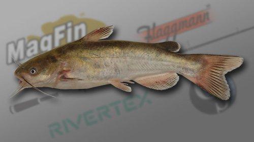 White Catfish1.jpg