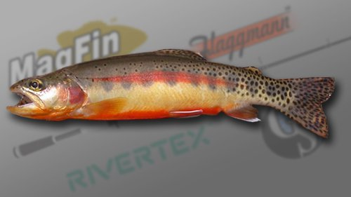 Golden Trout Fishing | Colorado Golden Trout Fish Fishing Planet Forum