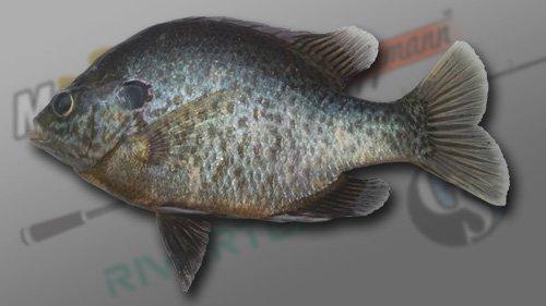 RedearSunfish1.jpg