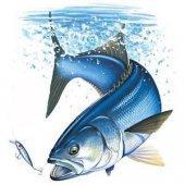sefke-ribolovac